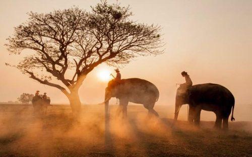 مزرعه فیل ها – تایلند