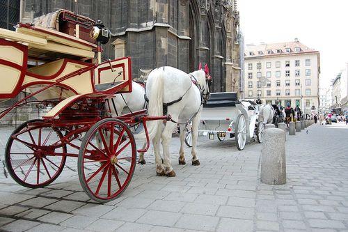اسب تاکسی ها در شهر وین- اتریش