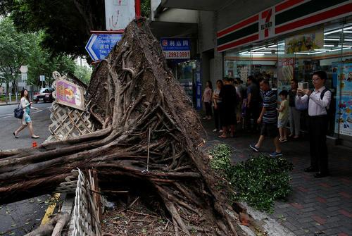 کنده شدن یک درخت از ریشه در توفان نیدا در هنگ کنگ