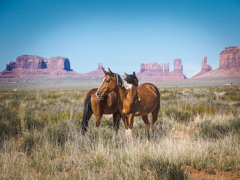 دو اسب وحشی در آریزونای آمریکا