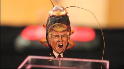 نقاشی چهره ترامپ روی سوسک