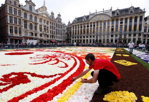 کار بر روی یک فرش بزرگ از گل در یک میدان شهر بروکسل بلژیک