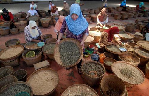 کارگران یک مزرعه قهوه در سمارانگ اندونزی