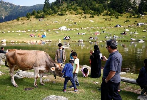 گردشگران در حال گرفتن عکس از گاوهای کنار دریاچه پروکوشکو در بوسنی هرزگوین