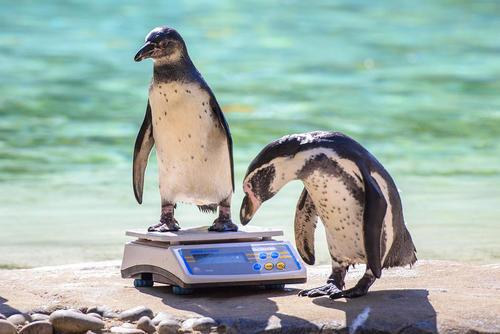 وزن کشی سالانه حیوانات در باغ وحش لندن