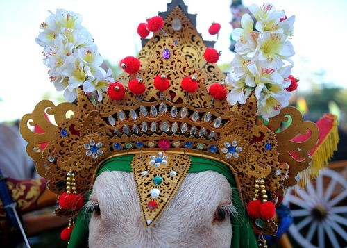 جشنواره ای در بالی اندونزی