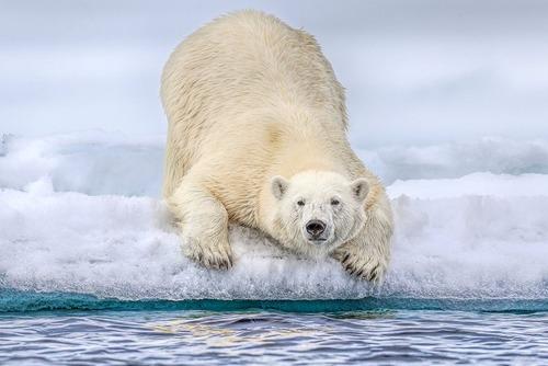 جزایر اسوالبارد نروژ در قطب شمال