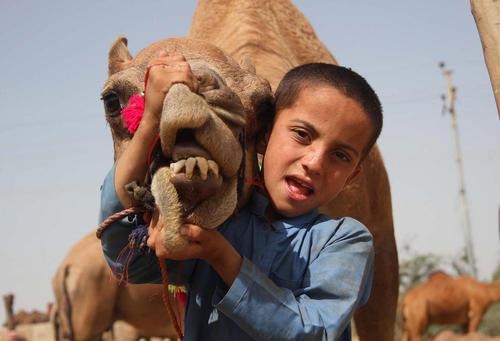 فروش شتر برای قربانی کردن در آستانه عید قربان – کراچی پاکستان