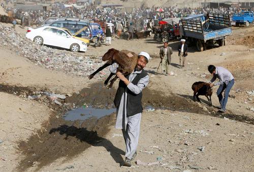تدارکات عید قربان در افغانستان – بازار احشام در کابل