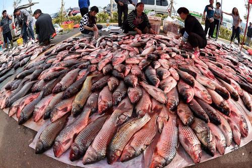 بازار ماهی فروشان در کنار رودخانه دیانچی در استان کانمینگ چین