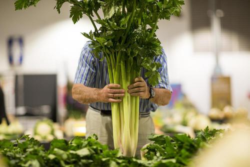 نمایشگاه محصولات کشاورزی در یورکشایر انگلیس