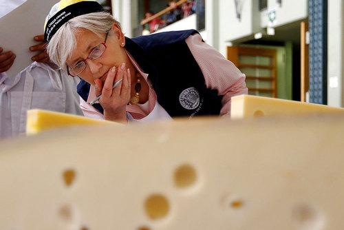 یک داور در جریان مسابقات بهترین پنیر - سوییس