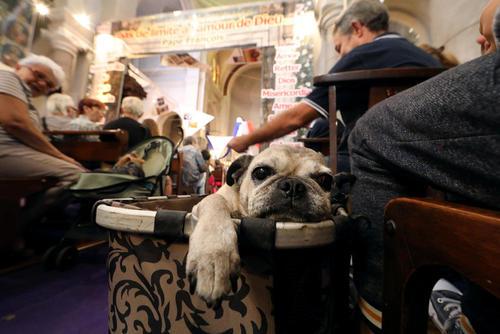 حضور با حیوانات خانگی در مراسم دعاخوانی در کلیسای