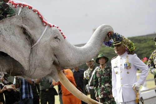 حضور فیل در یک جشن نظامی در استان آچه اندونزی