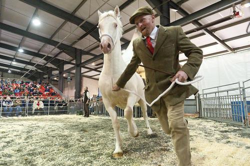 نمایشگاه فروش پاییزه اسب – ولز بریتانیا