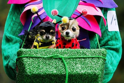 رژه سگ های خانگی به مناسبت جشن هالوین در منهتن نیویورک