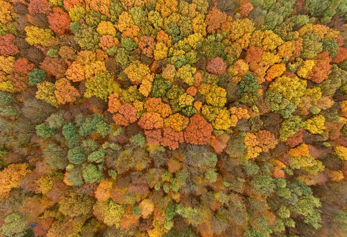 طبیعت پاییزی جنگلی شهری در کلن آلمان
