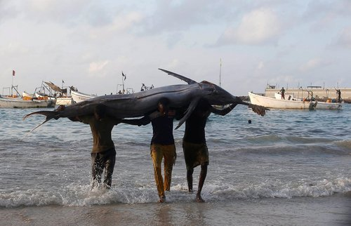 صید یک اره ماهی عظیم الجثه از سوی صیادان سومالیایی در ساحل موگادیشو