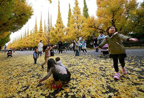 بازی کودکان در طبیعت پاییزه معبدی در شهر توکیو